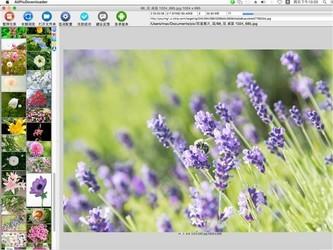 All网站图片批量下载器for mac版 3.17.05-第3张图片-cc下载站